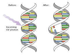 UV_DNA